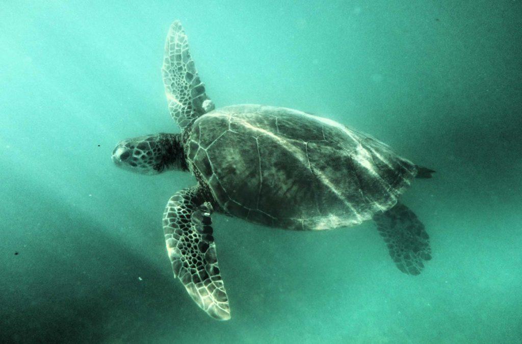 O que fazer no México - Praia de Akumal