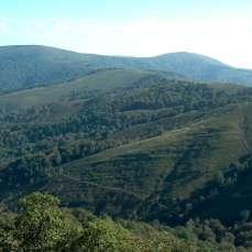 Bosques y Brezal