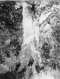 Foto antigua del Cubilón