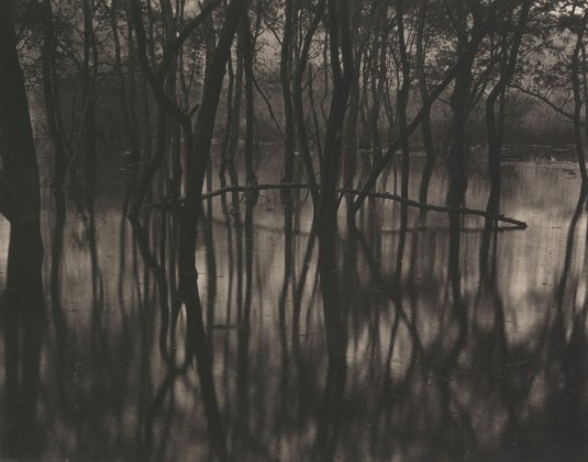 Takeshi Shikama, Silent Respiration of Forests I. Toyosawa Lake #1, 2009, platinum print on Gampi paper, Ed.9, cm 20.3x25.4