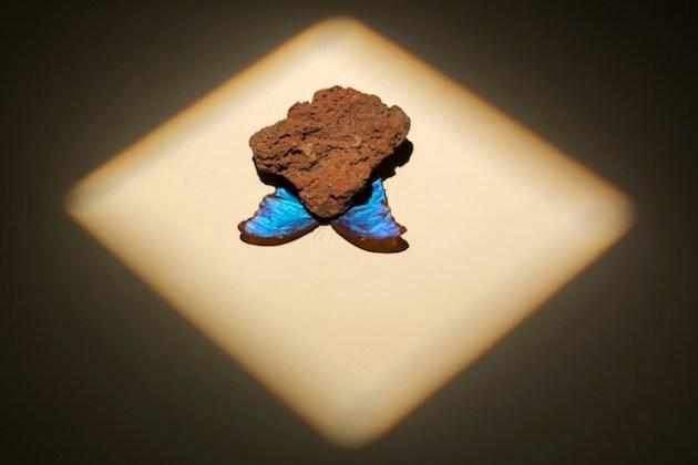 mediterranean autumn, 2013, butterfly, stone Courtesy Galleria Umberto Di Marino, Napoli, ph. Renato Ghiazza