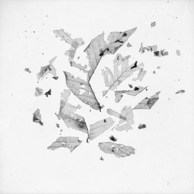 Gohar Dashti, Still Life #8, 2017, archival digital pigment print, photograms b&w, 120x120 cm, cyanotypes (blue print), 97x120 cm, edition of 10 Courtesy the artist and Officine dell'Immagine, Milan