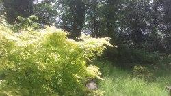 greenislandgardens1