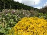Beth Chatto Gardens (1)