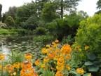 Beth Chatto Gardens (16)