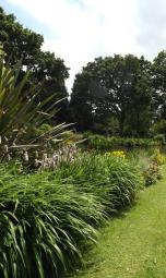 Beth Chatto Gardens (21)