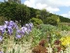 Beth Chatto Gardens (3)
