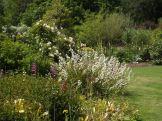 Beth Chatto Gardens (37)