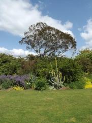 Beth Chatto Gardens (38)