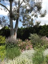 Beth Chatto Gardens (4)