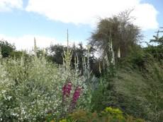 Beth Chatto Gardens (40)