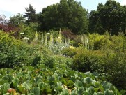 Beth Chatto Gardens (42)