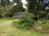 Beth Chatto Gardens (43)