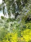 Beth Chatto Gardens (45)