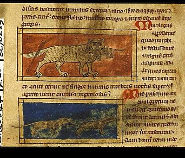 Sloane 3544 f. 20v Cat and rats