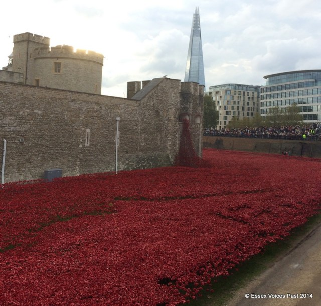 Tower of London - poppies against The Shard