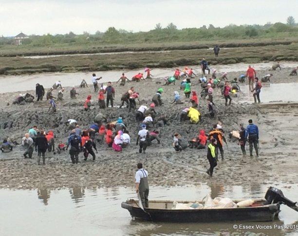 Maldon Mud Race 2015