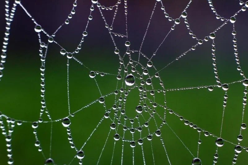A spider's net is pictured on October 19, 2014 in Wuerzburg, Germany.   AFP PHOTO / DPA / KARL-JOSEF HILDENBRAND /GERMANY OUT        (Photo credit should read KARL-JOSEF HILDENBRAND/AFP/Getty Images)