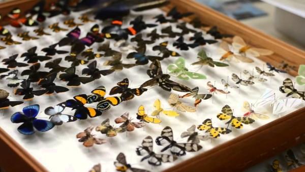 Além disso, nas aulas de zoologia você irá aprender a identificar diversas espécies de animais. Inclusive, poderá ter de construir uma caixa entomológica com vários insetos de diferentes grupos, como esta na imagem. Foto: Divulgação.