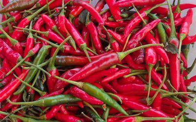 Pourquoi mettons-nous, dans les pays chauds, beaucoup de piments et d'épices dans la nourriture ?
