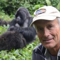 Jack Hanna Agrees '1,000 Percent' with Killing of Gorilla Harambe (Watch)