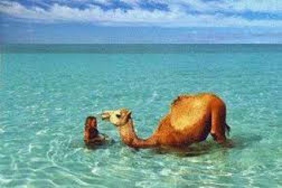 Fremme ved havet