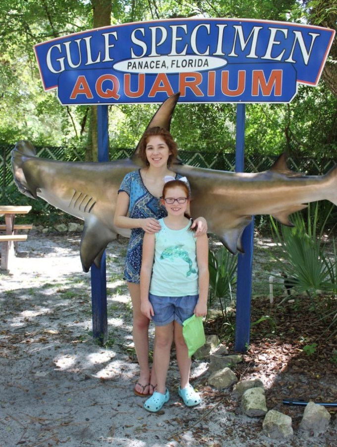 Gulf Specimen Marine Lab in Panacea Florida is the place to go for those that love ocean life!   EverydayMadeFresh.com