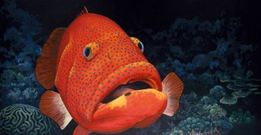 460 PUZZLED GROUPER