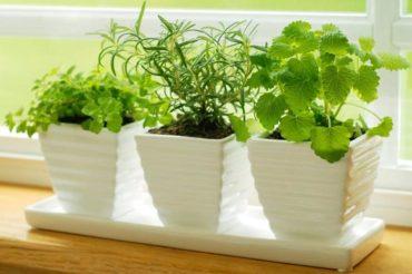Uprawa ziół w domu – Od czego zacząć