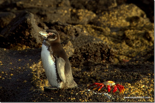 Ma photo favorite des Galapagos !