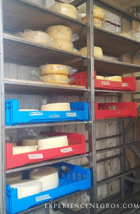 Cheeses being aged.