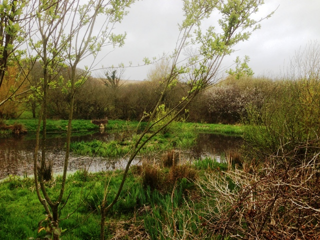 The Pond at the end of the Woodland Walk