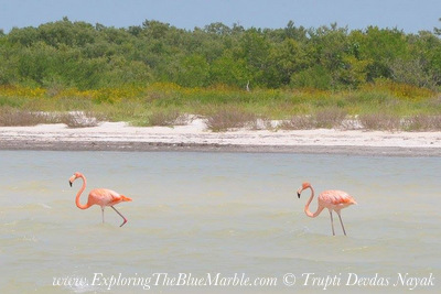 Flamingoes Isla Holbox Mexico