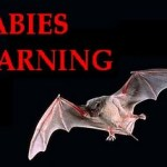Rabid bat discovered in Glen Burnie apartment, residents warned