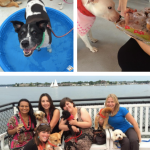 3rd Annual Dog Days of Summer Cruise