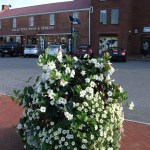 Help keep Annapolis in bloom