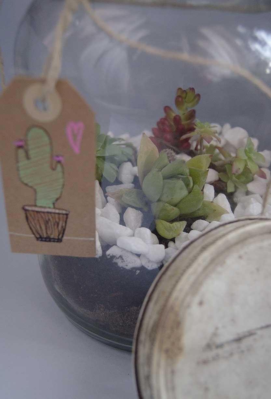 terrario cactus (2)
