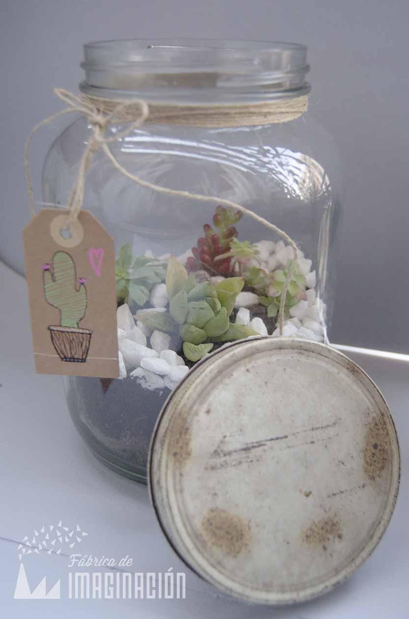 terrario cactus (3)