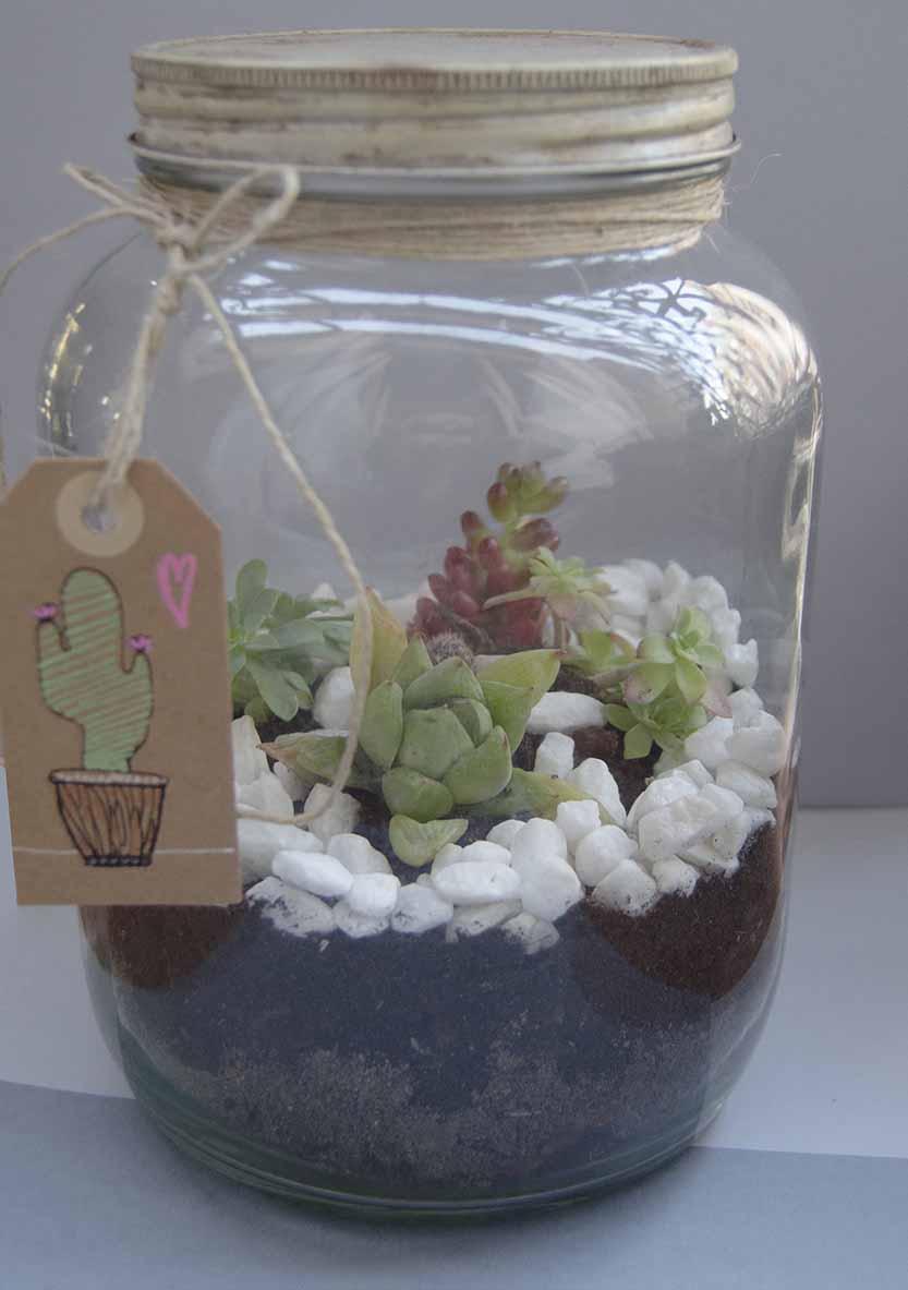 terrario cactus (7)