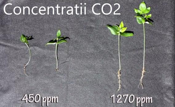 CO2 folosit la plante