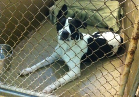 Fab-Finds-Featured-Story-flagler-humane-society-black-white