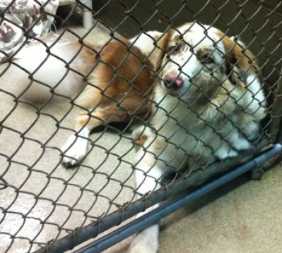 Fab-Finds-Featured-Story-flagler-humane-society-brown-white