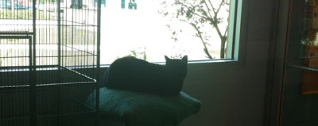 Fab-Finds-Featured-Story-flagler-humane-society-chillin-cat