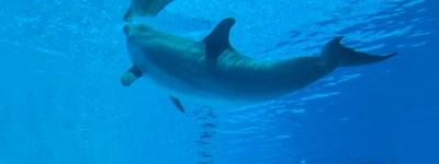 head_dophin