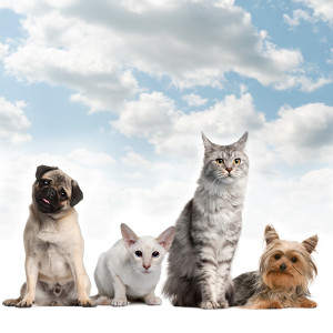 Rise in Pet as Therapy for Mental Conditions