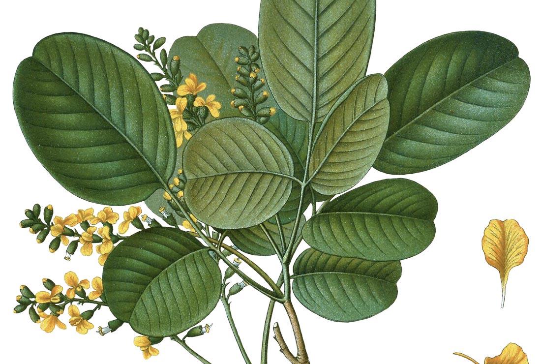 homeopatia i aromateràpia