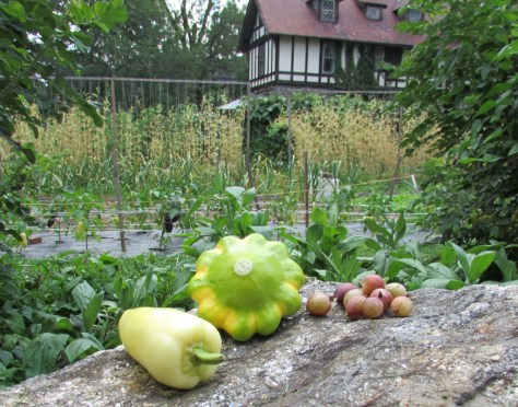 Pepper, squash and gooseberries, purchased at Wyck Farmers Market on July 11, and photographed on the farm