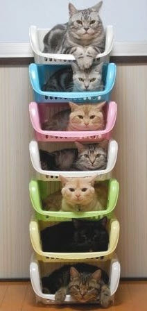 favorite_cat_picture_of_the_day