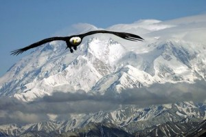 bald eagle in mountains 300x199 Accused of Insider Trading, Rajat Gupta Helped RIL