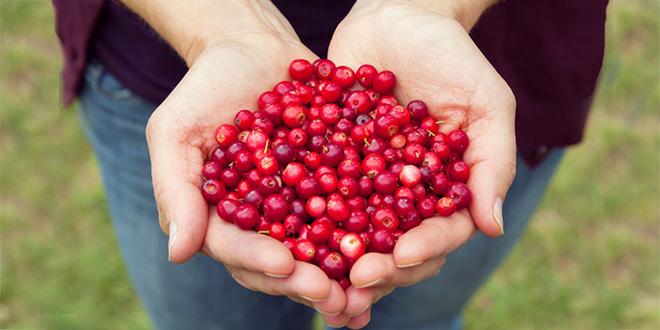 Cranberries enthalten viel Vitamin C – Die kleinen Helfer fürs Immunsystem im Herbst